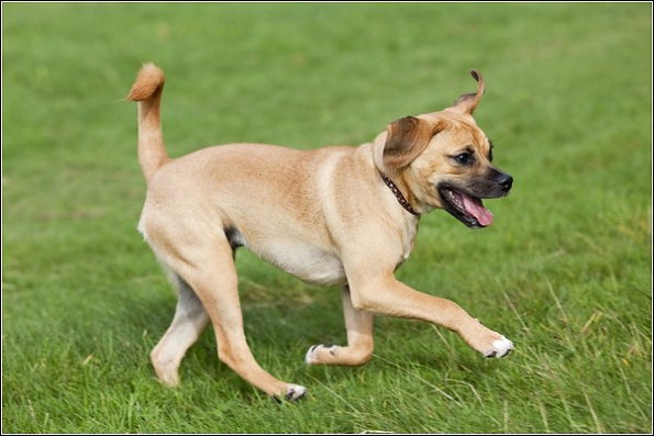 Dog Photography Pug Beagle