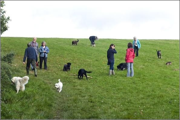 Dog Photography Kent, Bidborough Dog Walkers