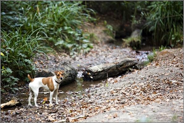 Kent dog photographer