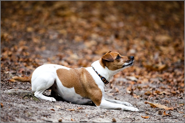 Dog photography in Tunbridge Wells