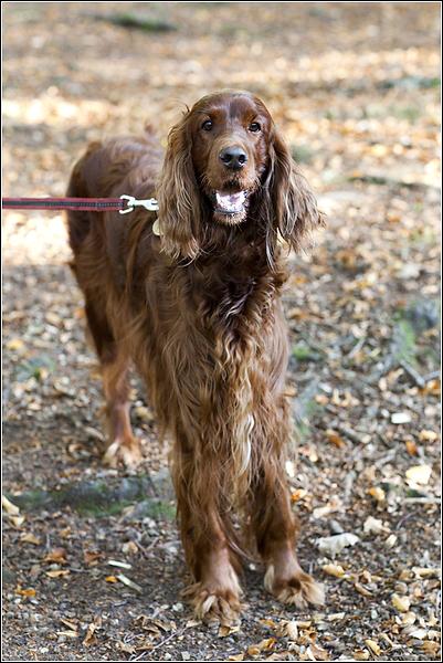 Tunbridge Wells dog photography