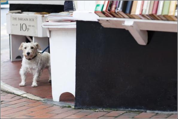dog photographer sussex
