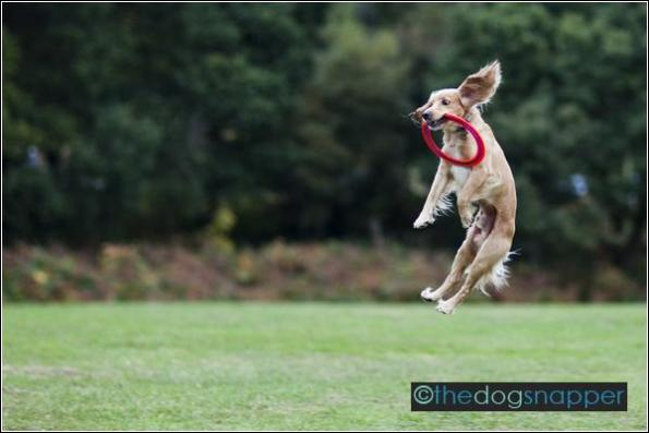 Barney, the Flying Dog