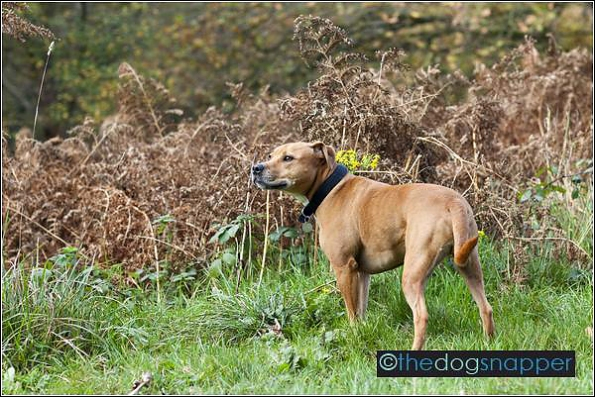 tunbridge wells dog photography