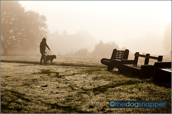 Early Misty Morning Dog Walker