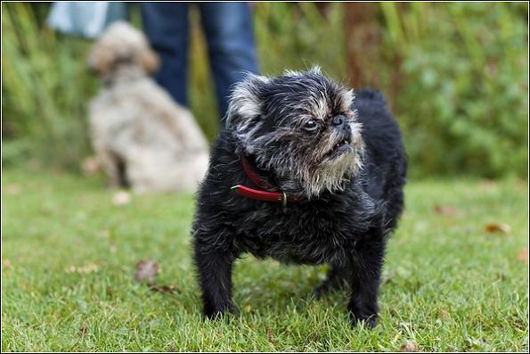 tunbridge wells dog photographer