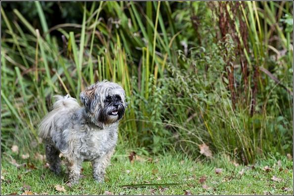 surrey dog photography