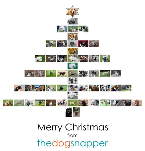 The Dog Snapper Christmas Card