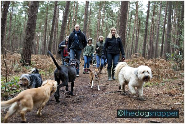 Twoofers Dog Walk Broadwater Warren