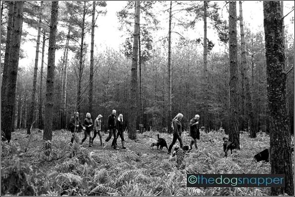 Twoofers Dog Walk Broadwater Warren