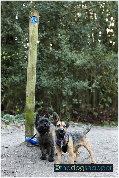 Tilly (Patterdale Terrier) & Bibi (Cairn Terrier)