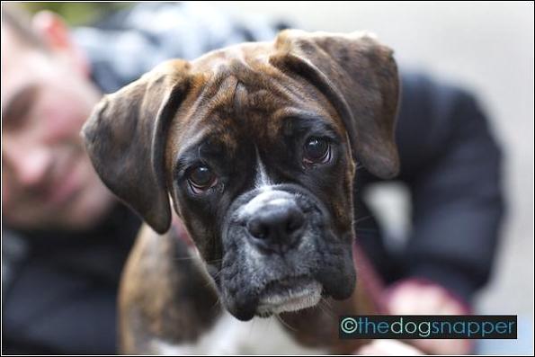 Jessie, Boxer