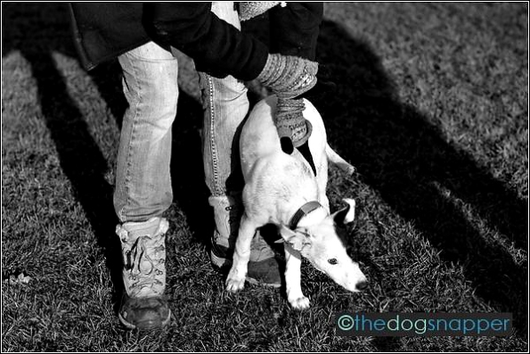 Lily, Collie X Greyhound