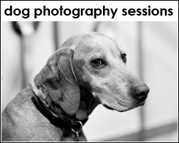 Dog Photography Sessions