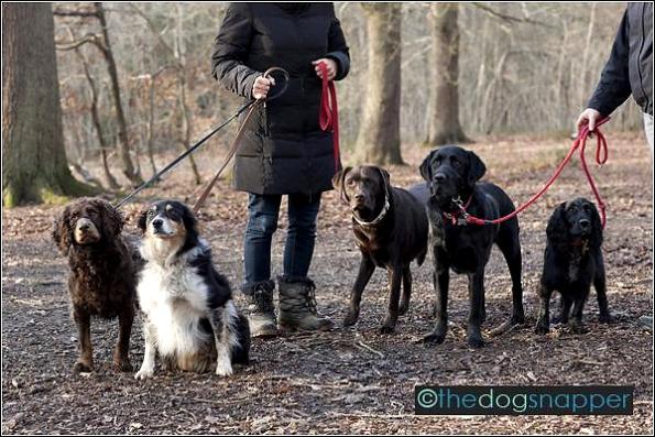 Archie, Honey, Maisy, Holly & Jess