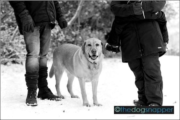 Fred, Labrador