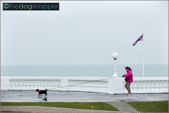 Dog Walker in Bexhill