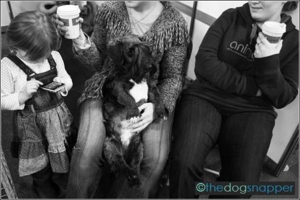 Suzi Q, Cesky Terrier