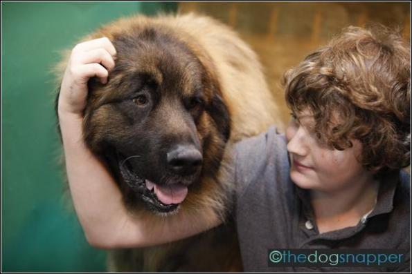 Valverde, Estrela Mountain Dog