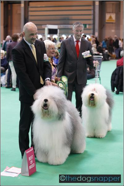 Old English Sheepdog, Best in Breed
