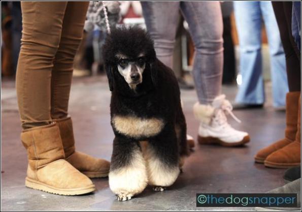 Etta, Bedlington Terrier
