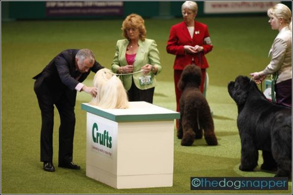 Elizabeth, Lhasa Apso, Best In Show Winner at Crufts 2012