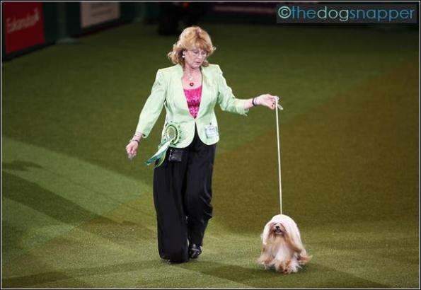 Crufts Best In Show 2012, Elizabeth (Ch. Zentarr Elizabeth) a Lhasa Apso with owner Margaret Anderson from Coventry.