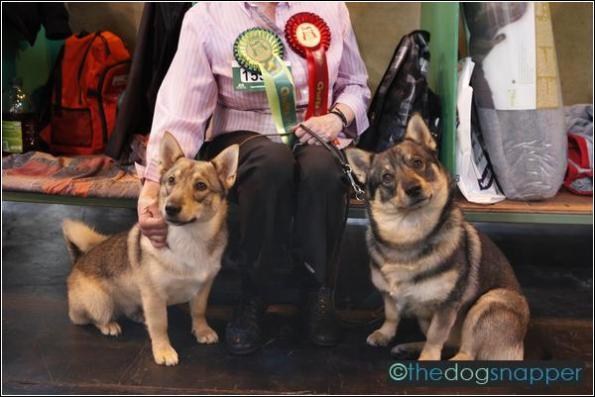 Truls & Tyke, Swedish Vallhund
