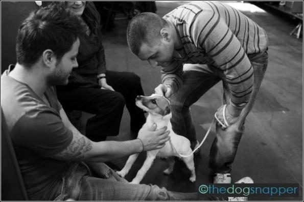 Stitch, Parson Russell Terrier