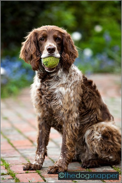 dog photography Tunbridge Wells