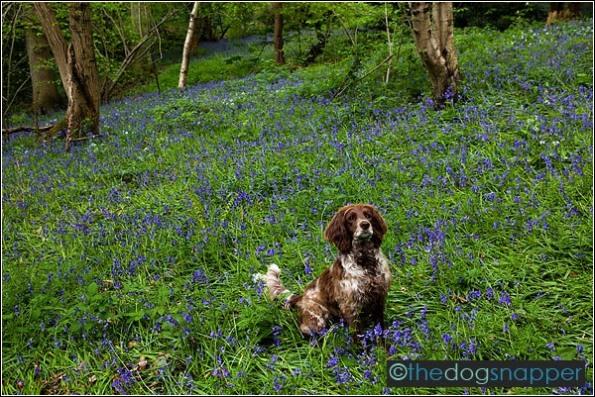 dog photography Kent
