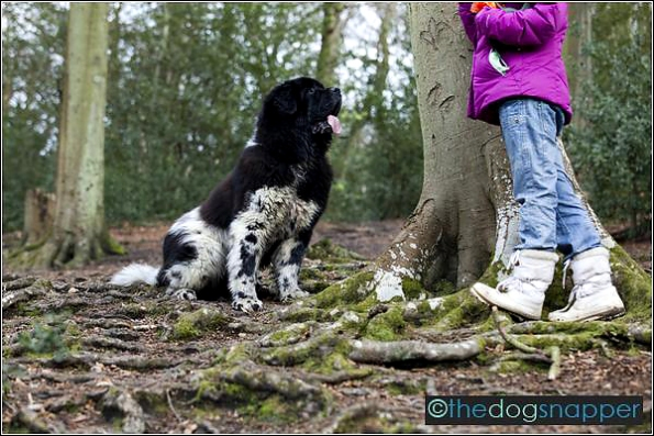 Kent Dog photographer