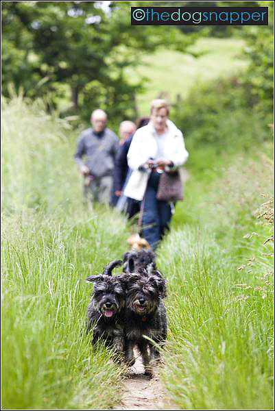 dog photographer Tunbridge Wells