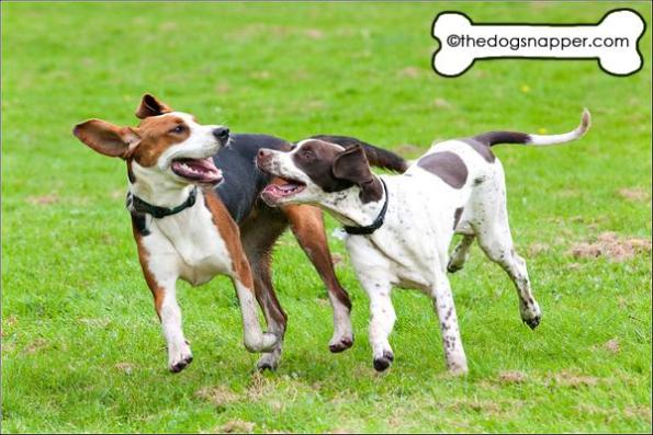 Dog photographer Tunbridge Wells