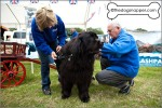 Splashpals Working Newfoundlands