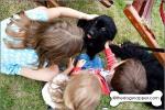 Piper, a Splashpals Working Newfoundland puppy