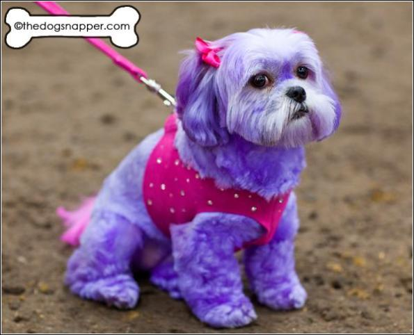 Diva Dogs Day photographs