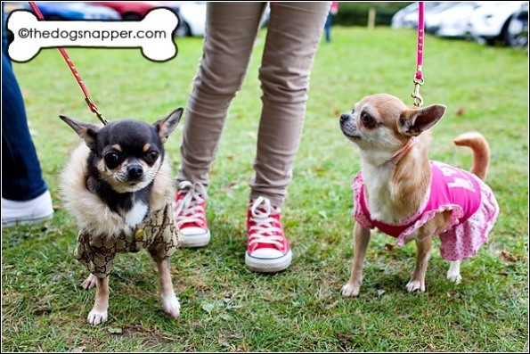 Honey (right) and Tinkerbell, Chihuahuas