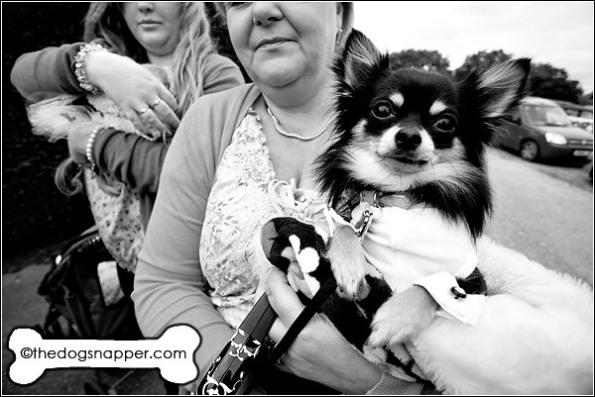Hero, Chihuahua
