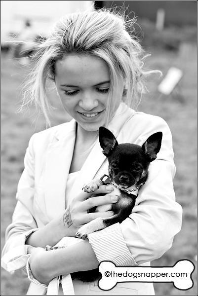 Tiffany, Chihuahua