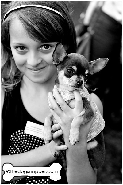 Bluebelle, Chihuahua