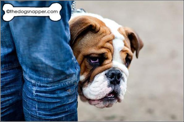 Butler, Bulldog