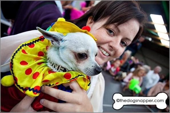 Rodney, Chihuahua