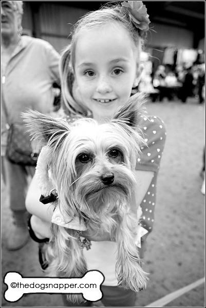 Sonny, Yorkshire Terrier