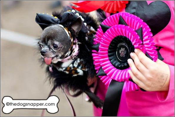 Best in Show at Diva Dogs Day