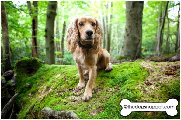 dog photographer Kent